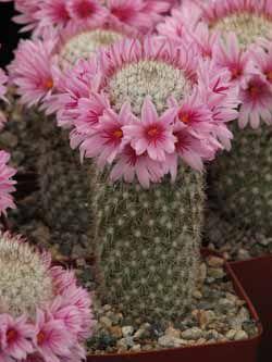 Shop Premium Cactus and Succulent Plants