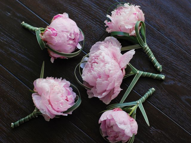 paeony boutonnieres