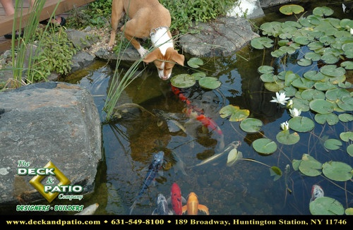 273 best images about water features on pinterest for Koi pond york
