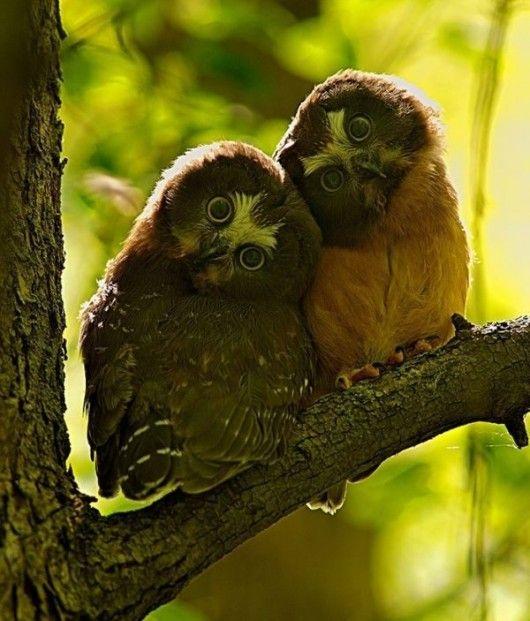 friends: Animals, Nature, Hoot Hoot, Creatures, Things, Photo, Birds, Owls