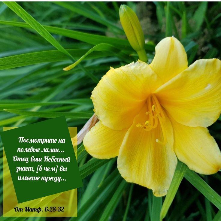 #LDSshareexpo, #ЦерковьИисусаХристаСвятыхПоследнихДней, #мормоны, #лилии, #красотавокругнас, #ЗаботаНебесногоОтца, #цветы, #природа