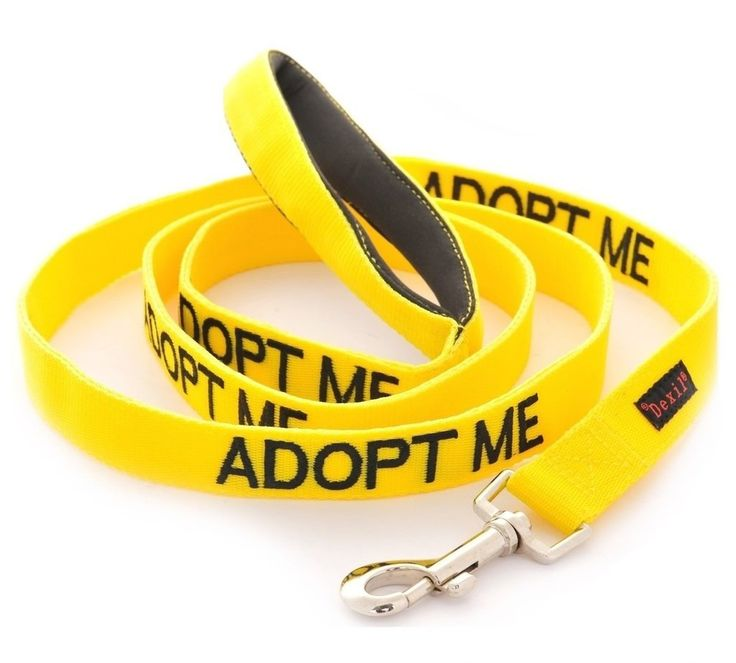 ADOPT ME Dexil Friendly Dog Collars Color Coded Dog Accident Prevention Leash 6ft/1.8m Prevents Dog Accidents By Letting Others Know Your Dog In Advance Award Winning *** Details can be found by clicking on the image. (This is an affiliate link and I receive a commission for the sales)