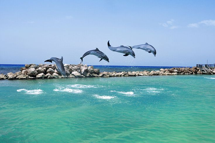 Montego bay is most famous destination in Jamaica, is so popular that is crowded with people all year long. Despite this Montego is area full with beauties .