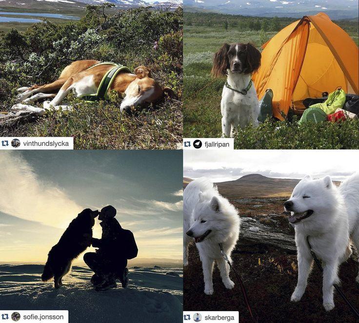 På Instagramkontot vandramedhund hittar du härliga bilder att inspireras av.