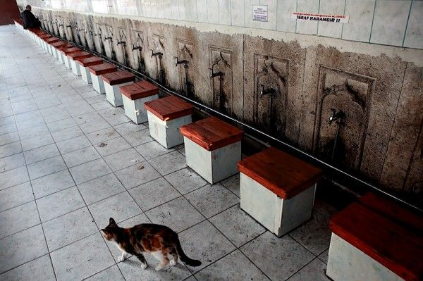 A thriving cat culture in Istanbul and elsewhere in Turkey reflects a tradition-bound country on the path to modernity. It's derived in part from Muslim concepts about tolerance, and an urban elite that reflects Western ideas about animal rights. Cats benefit from their association with Islam in Turkey, where the majority of the population is …