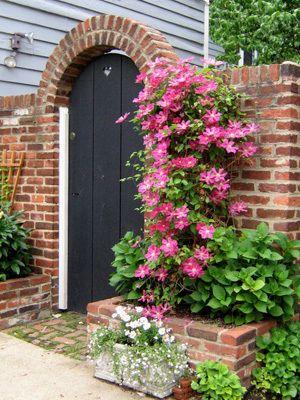 Clematis on Garden Gate