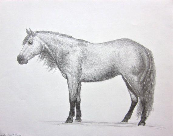 horse art Quarter Horse In Pencil original graphite by ...