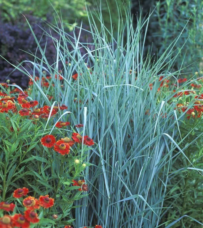 88 best garden mi front yard images on pinterest for Ornamental grasses for front yard