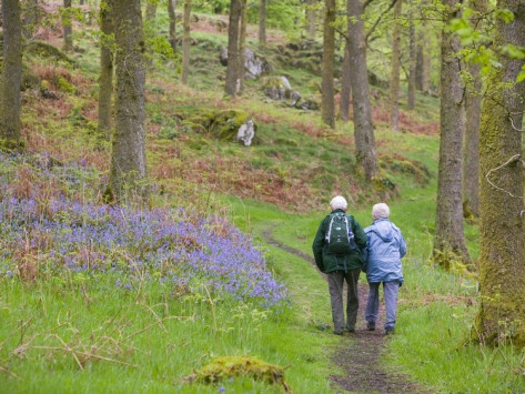 Option 1:    An Elderly Couple Walking Through a Bluebell Wood on the Shores of Coniston Water, United Kingdom Photographic Print