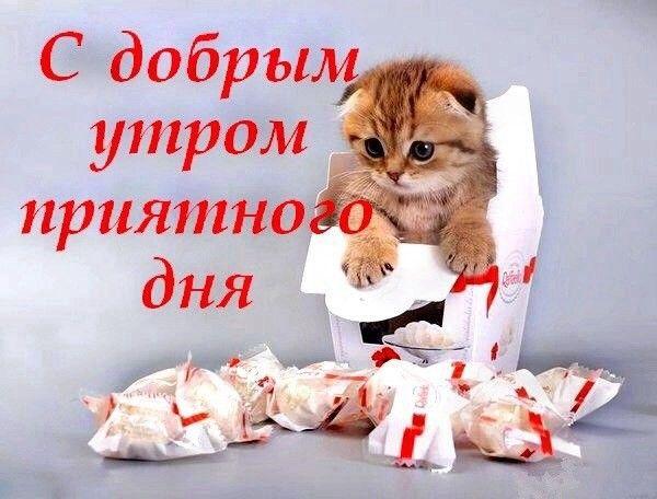 Открытки с котами с добрым утром прикольные