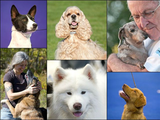 National Purebred Dog Day celebrates the diversity, heritage and contributions of the purebred dog, and it needs a home: A web site