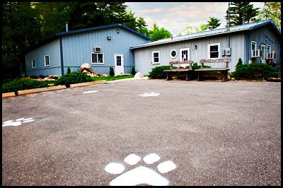 What a cute idea for the parking lot giant paw prints