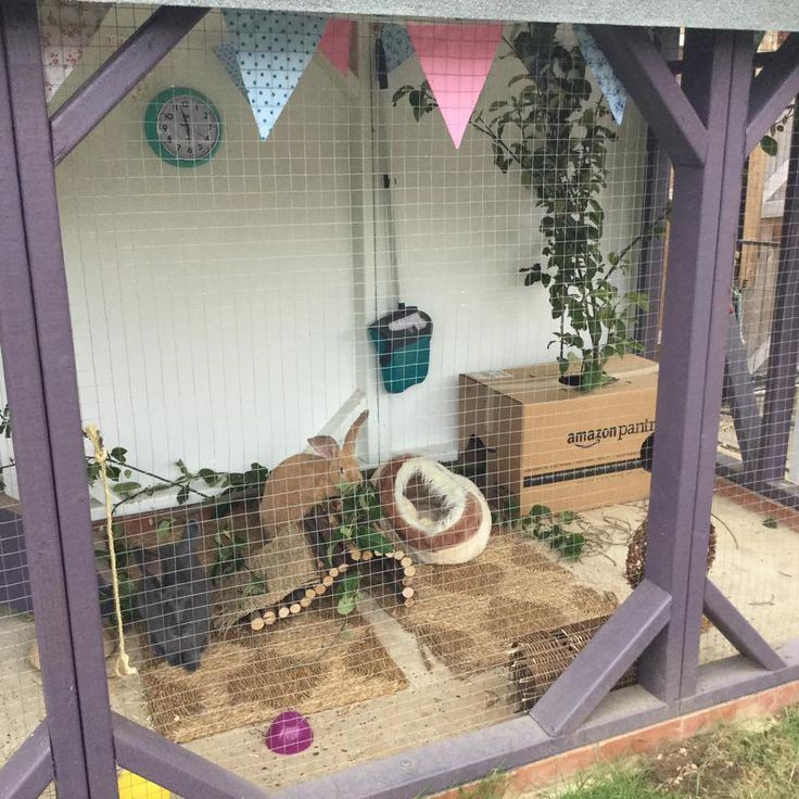 Inside homes these rabbits have every need catered for #ahutchisnotenough Photo courtesy of Louise Sloat