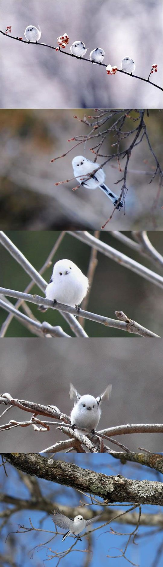 The cutest bird you'll see today… aaawwww