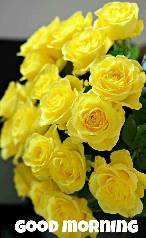 Good Morning Amno Jan Jan Flowers Beautiful Roses Yellow Roses
