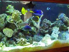 Top 10 Saltwater Aquarium Supplies Owners Should Have