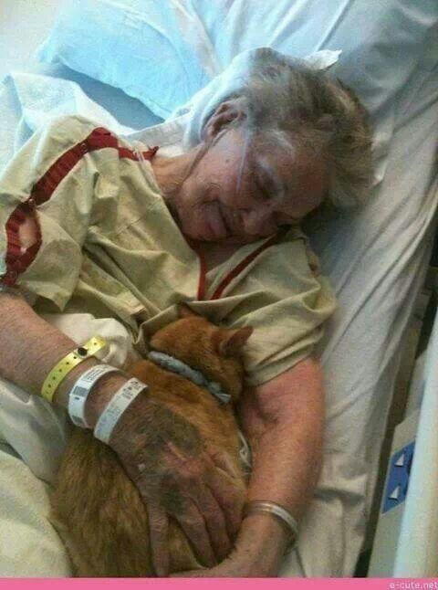 """Twitter user Amanda @Panda333 wrote: """"A hospital allowed this lady's cat to visit her before she died. This act of kindness makes me cry"""""""