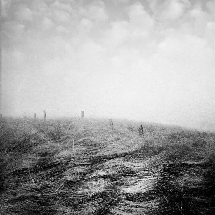 What The Wind Wants © Buckner Story-Sutter