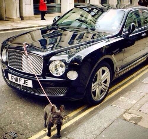 Luxury Cars Bentley Car Cars: Black French Bulldog Luxury Car