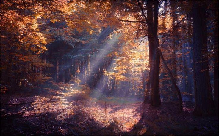 Природа пейзаж лес солнечные лучи красочный туман падения деревьев листья кустарников 4-размер Домашнее Украшение Холст Печати Плакатов