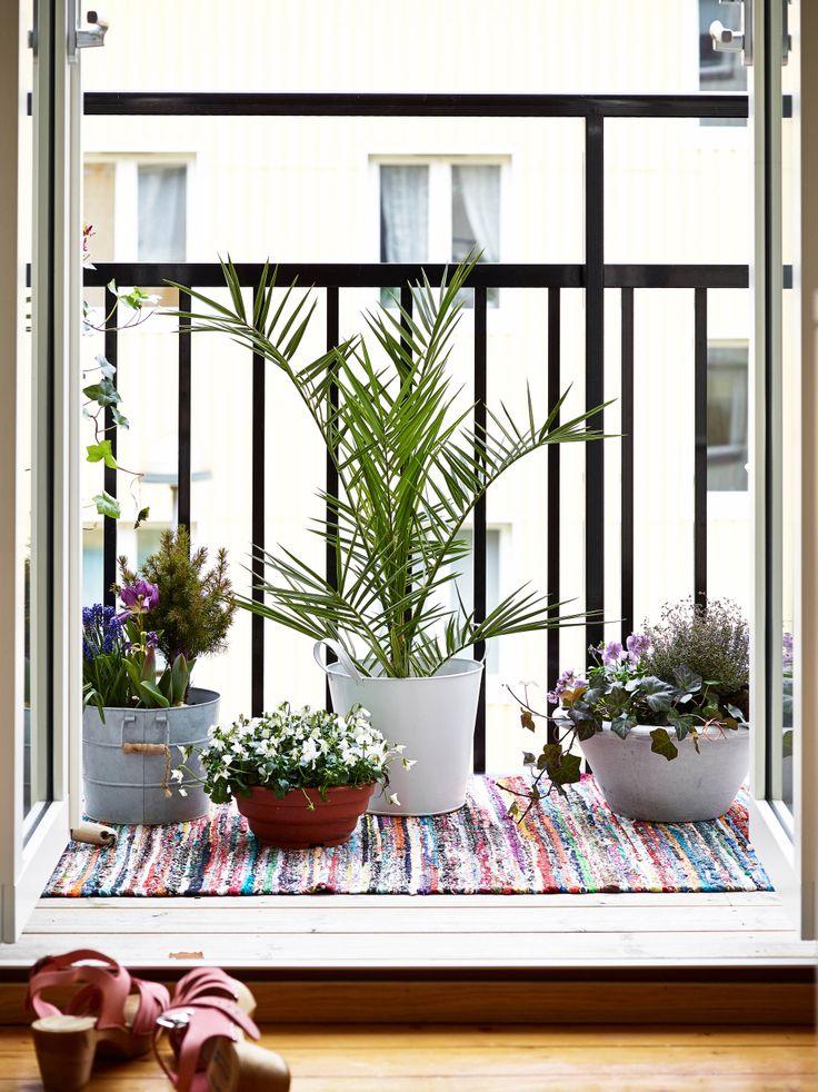 faire fleurir son balcon parisien