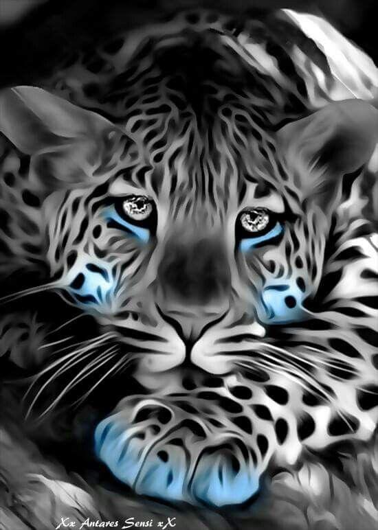 Bello Tigre Blengala.