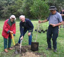 Planting at Pukekmokemoke Bush Reserve.Photo: Alan Leadley.