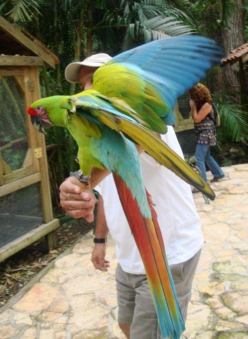 Macaw Mountain Bird Park in Copan, Honduras: Photo Tour: Hold a Macaw at Honduras's Macaw Mountain