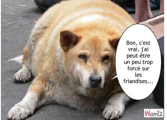 Un chien trop gros lolcats r alis sur wamiz choses dr les funny cats animals et humor - Photo de chiot a imprimer ...