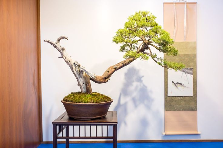 National Bonsai Exhibition