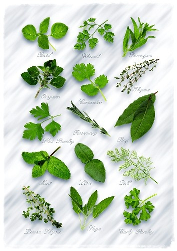 Herbs, to look at, to smell, to pluck for cooking...