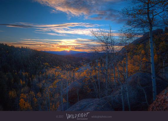 In Mueller State Park, near Colorado Springs, the sun sets over the fall color of golden aspen trees. This autumn colored canvas or print will bring the glow of fall foliage to any bedroom, living room, or office. Tags: Colorado fall colors, Aspen trees, autumn foliage, Colorado landscape, Mueller State Park, sunset photo