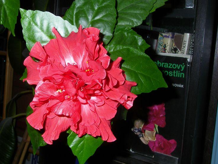 """I člověka, který není právě vášnivým pěstitelem, rozesmutní, když si pořídí pokojovou květinu, a ona se """"nechová"""" tak jak by měl"""