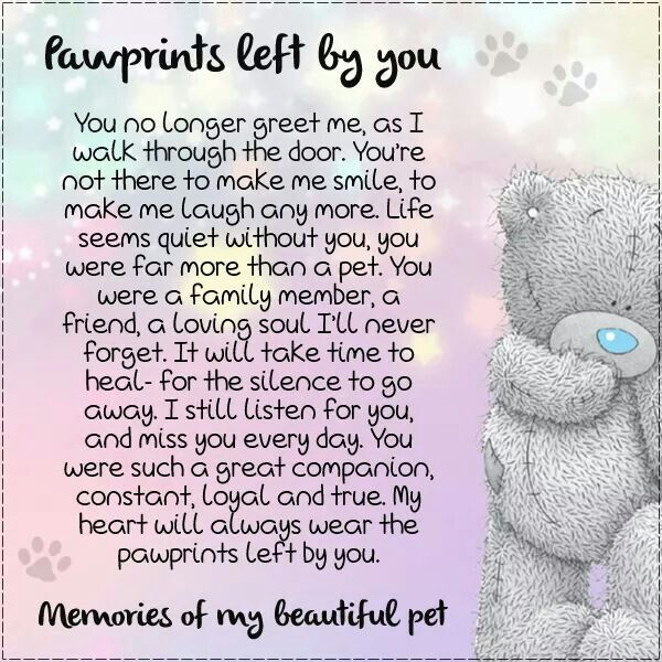 Pawprints left by you