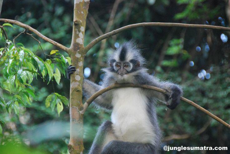 Bukit Lawang Jungle Trekking | Sumatra