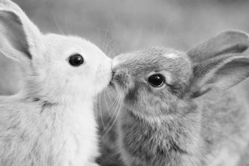 bunny kissess