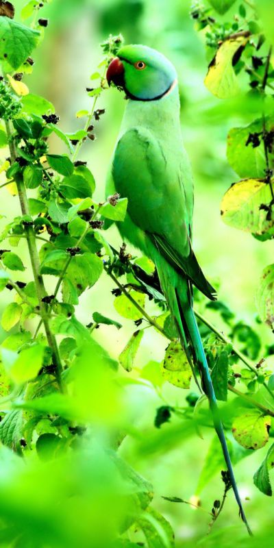 lovely green parrot, lovely green leaves, lovely green background- guess which colour is the TRUE colour in this picture....