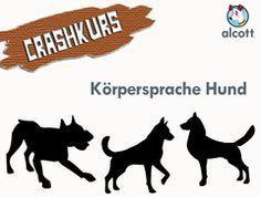 CRASHKURS: Verstehe, wie dein Hund sich in verschiedenen Situationen fühlt und lerne seine Körpersprache zu deuten.