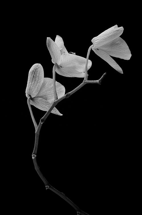 17 images about floral black and white on pinterest