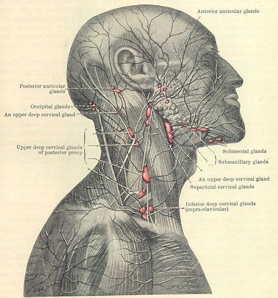 Viral Infection Link To Sjogren S Syndrome: Http://www.explain-health.com/causes-swollen-lymph-nodes