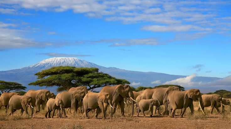 #Tanzanie , Parc national du #Serengeti . Situé au Nord du pays, c'est le second plus grand parc animalier d'Afrique avec plus de 4 millions d'animaux. http://vp.etr.im/4f77