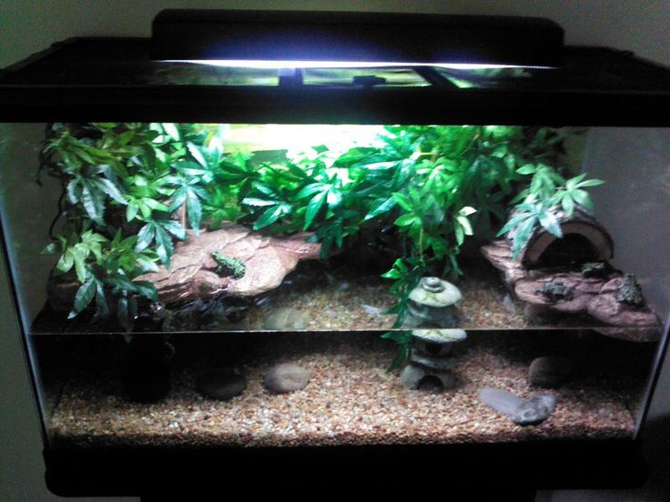13 best fire bellied toad images on pinterest fish for Fish tank terrarium