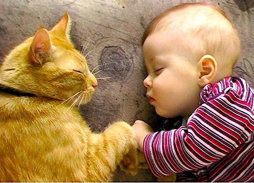 Los niños y los animales domésticos