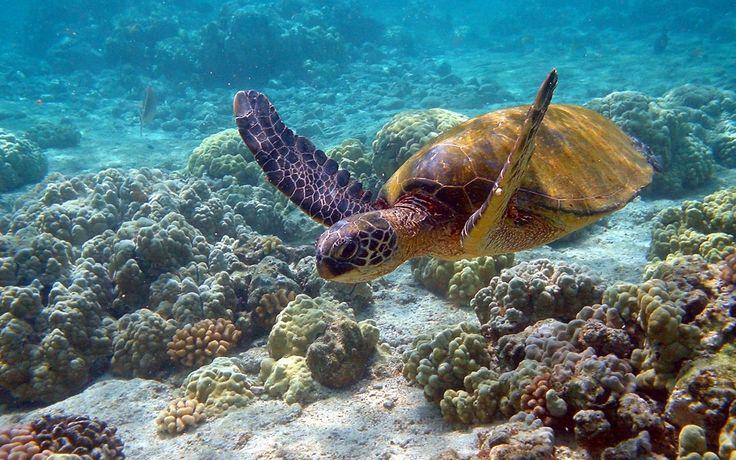 Большой Барьерный Риф - Путешествуем вместе