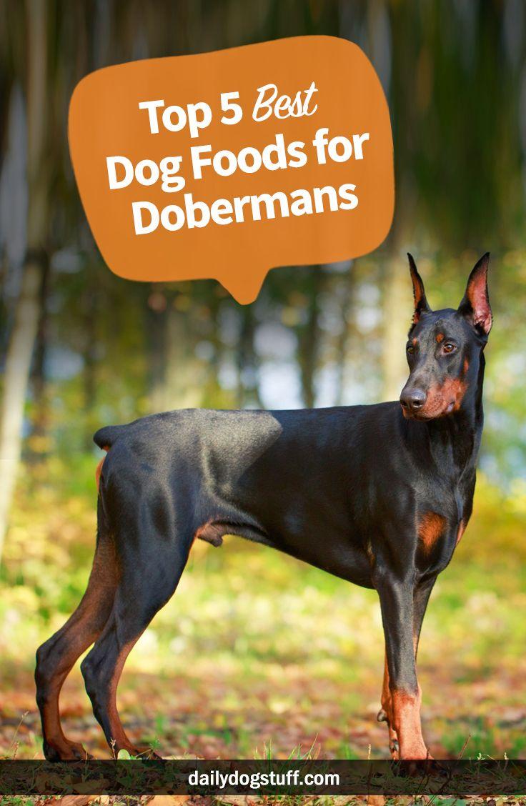 Top 5 Best Dog Foods For Dobermans Best Dog Food Doberman Dog