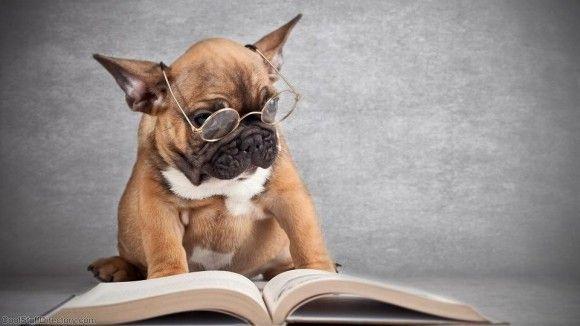 人は小説を読むことで、脳に長期的な影響を与えることが判明(米研究) : カラパイア