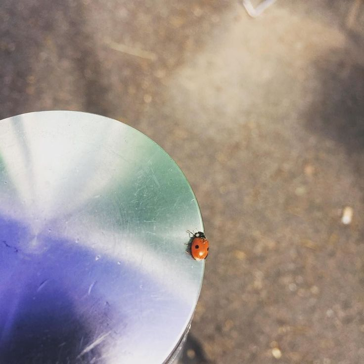 A little ladybug walk around a pole #ladybug #walking #little @xamkfi @visitkouvola