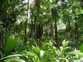Children's Bible Ministry: Rainforests