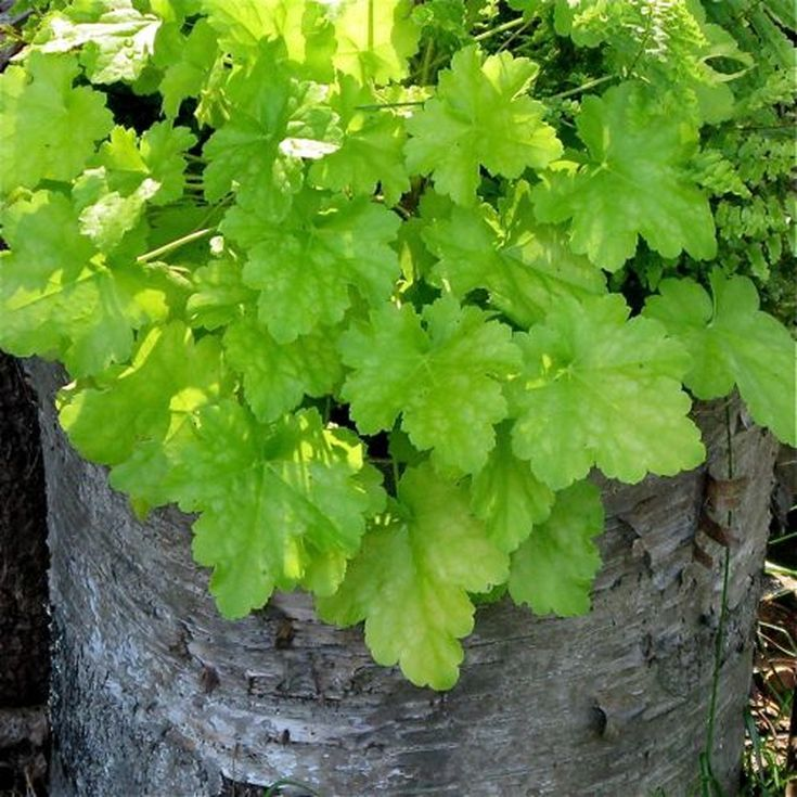 Foliage Plants That Look Great and Thrive in Containers