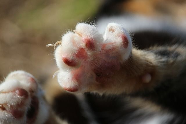Can Cat-Scratch Disease Lead to Eye Infections? -  http://www.catscratchmed.com/can-cat-scratch-disease-lead-to-eye-infections/ Cat-scratch disease(CSD) or commonly known as cat-scratch fever is generally a benign bacterial infection caused by cat scratches or bites. The organism Bartonella henselae, residing in cat fleas, has been identified in 1990s to be the bacterium that causes this disease. The usual symptoms of...